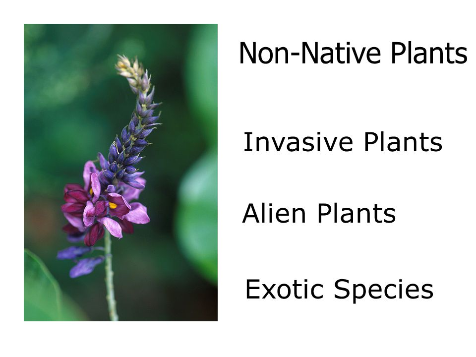 Non-Native Plants Invasive Plants Alien Plants Exotic Species