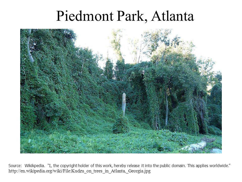 Piedmont Park, Atlanta Source: Wikikpedia.