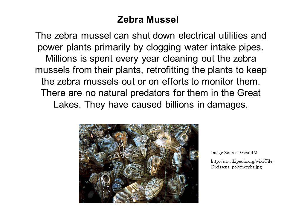 The zebra mussel can shut down electrical utilities and power plants primarily by clogging water intake pipes.