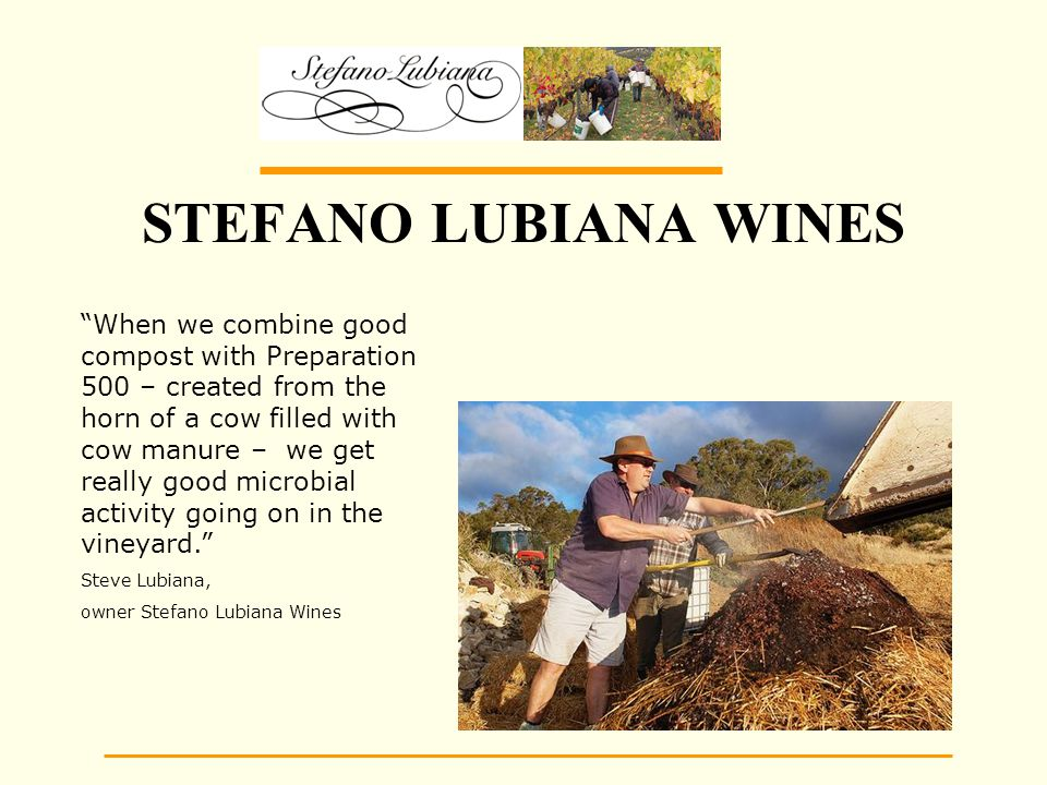 STEFANO LUBIANA WINES When we combine good compost with Preparation 500 – created from the horn of a cow filled with cow manure – we get really good microbial activity going on in the vineyard. Steve Lubiana, owner Stefano Lubiana Wines