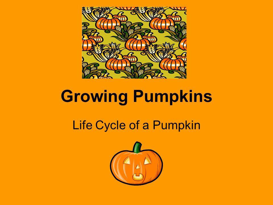 Growing Pumpkins Life Cycle of a Pumpkin