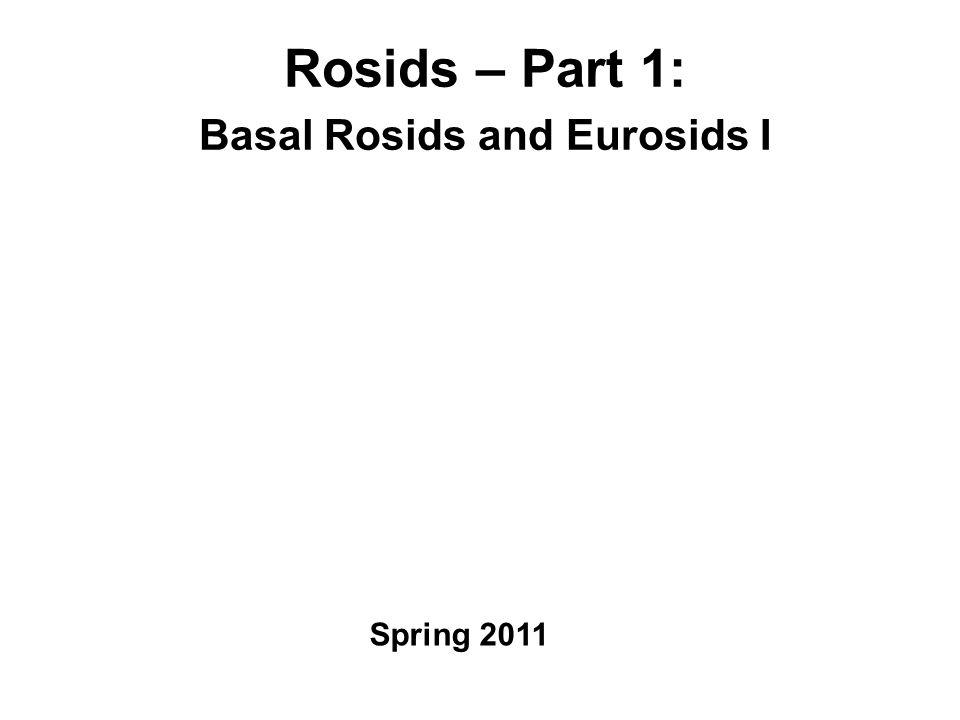 Rosids – Part 1: Basal Rosids and Eurosids I Spring 2011