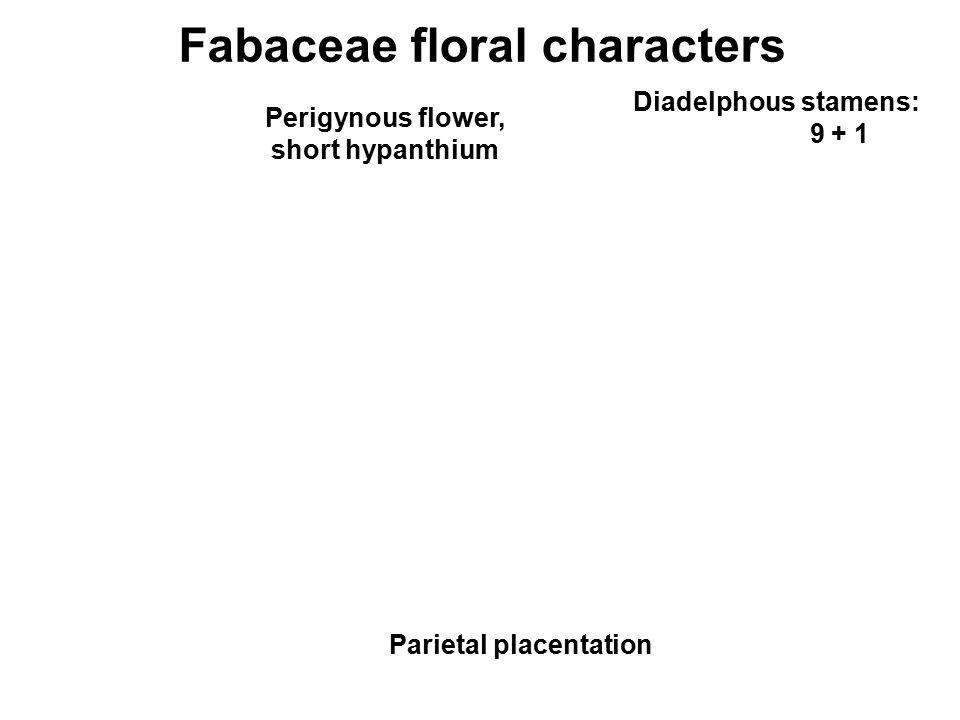 Fabaceae floral characters Diadelphous stamens: 9 + 1 Parietal placentation Perigynous flower, short hypanthium
