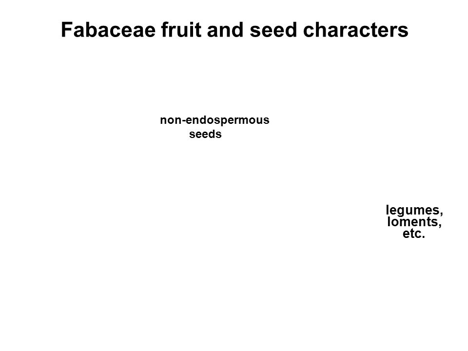 Fabaceae fruit and seed characters non-endospermous seeds legumes, loments, etc.