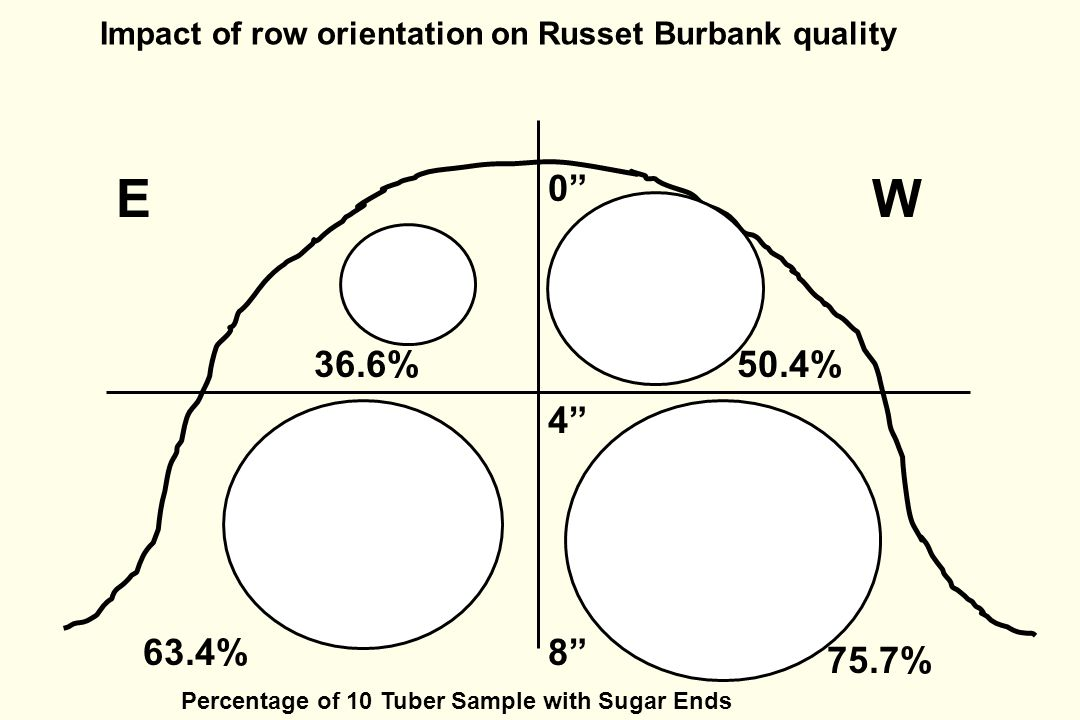 WE 75.7% 36.6%50.4% 63.4% 0 8 4 Percentage of 10 Tuber Sample with Sugar Ends Impact of row orientation on Russet Burbank quality