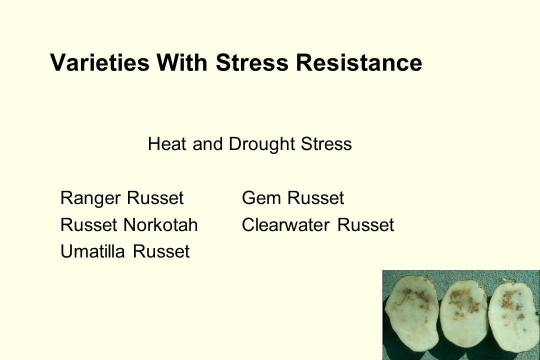 Varieties With Stress Resistance Heat and Drought Stress Ranger Russet Gem Russet Russet NorkotahClearwater Russet Umatilla Russet