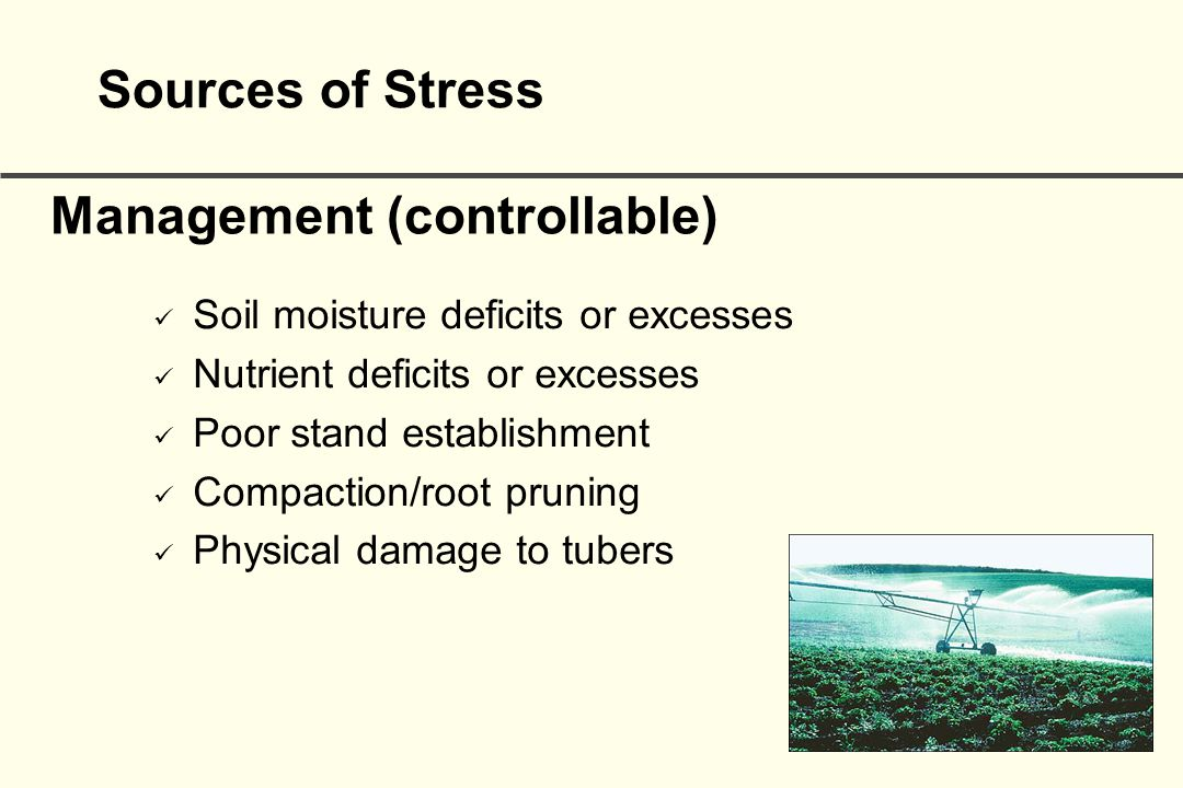 Management (controllable) Soil moisture deficits or excesses Nutrient deficits or excesses Poor stand establishment Compaction/root pruning Physical damage to tubers Sources of Stress