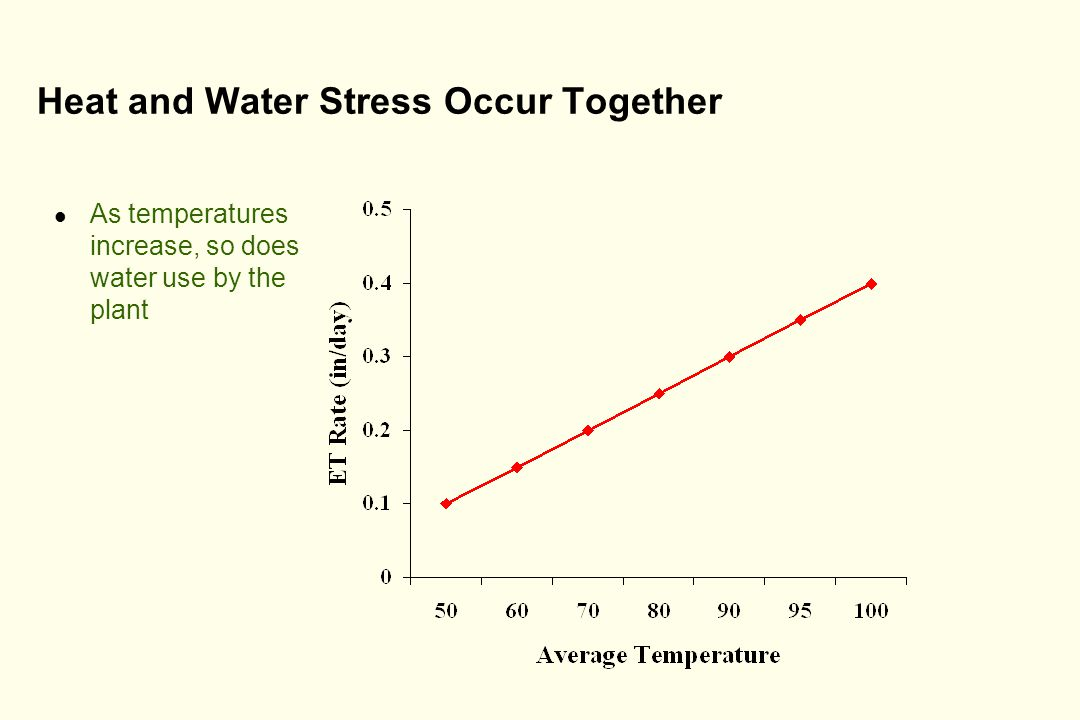 Heat and Water Stress Occur Together l As temperatures increase, so does water use by the plant