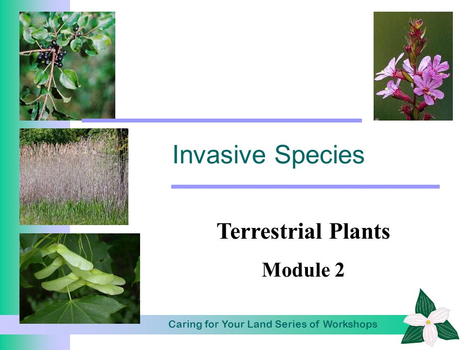 Caring for Your Land Series of Workshops Invasive Species Terrestrial Plants Module 2