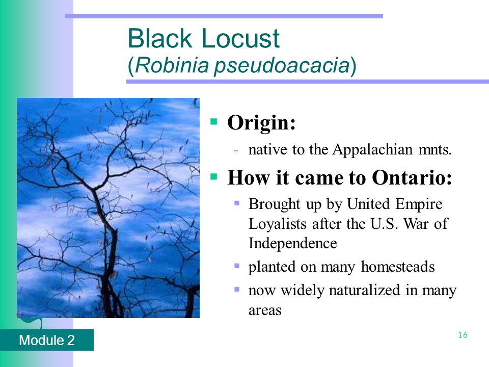 Module 2 16 Black Locust (Robinia pseudoacacia)  Origin: -native to the Appalachian mnts.