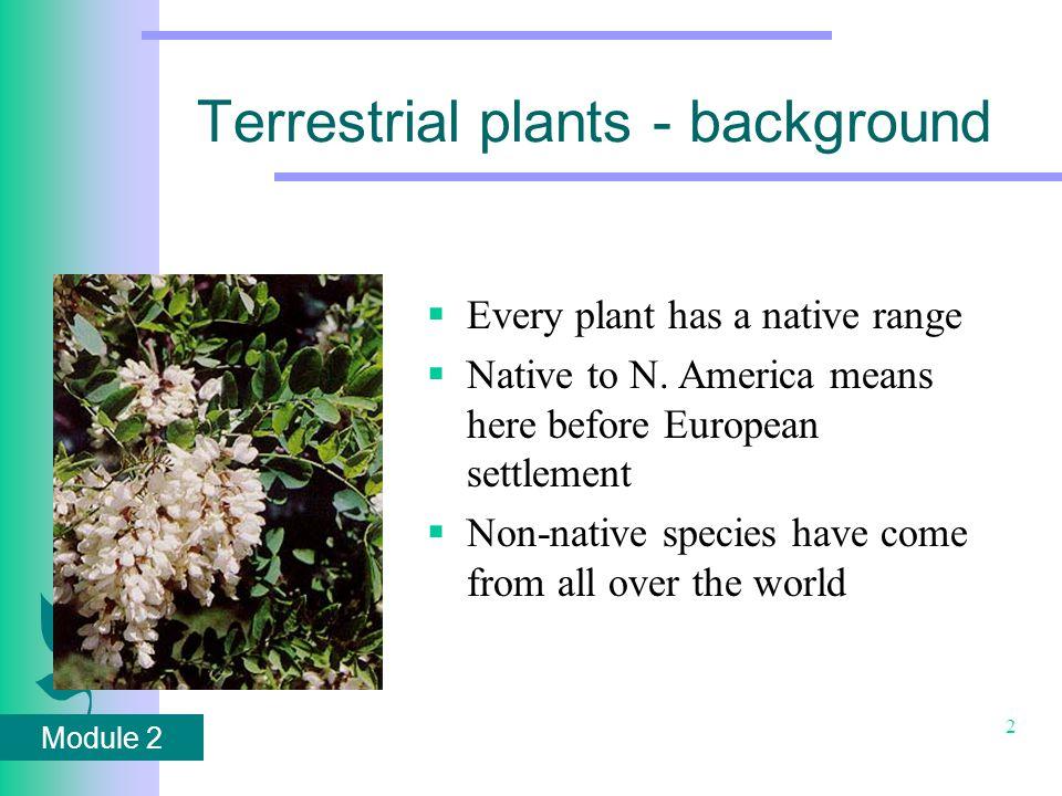 Module 2 73 Purple Loosestrife ( Lythrum salicaria)