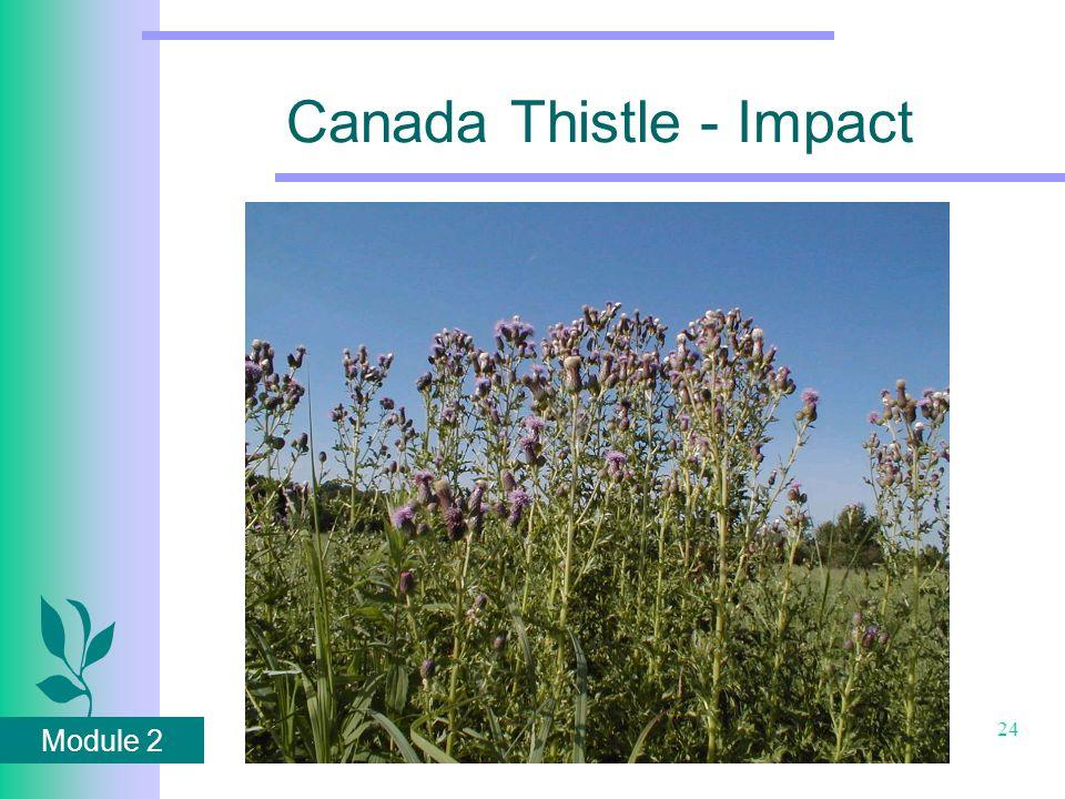Module 2 24 Canada Thistle - Impact