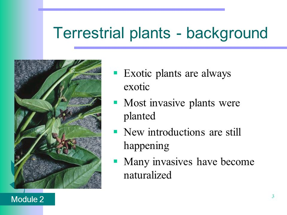 Module 2 3 Terrestrial plants - background  Exotic plants are always exotic  Most invasive plants were planted  New introductions are still happening  Many invasives have become naturalized