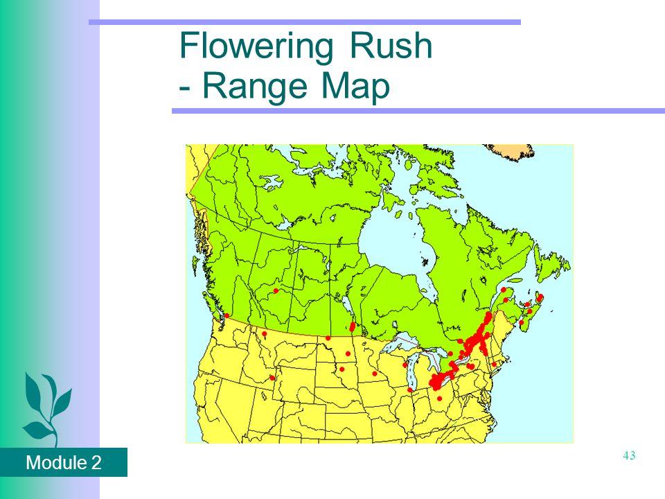 Module 2 43 Flowering Rush - Range Map