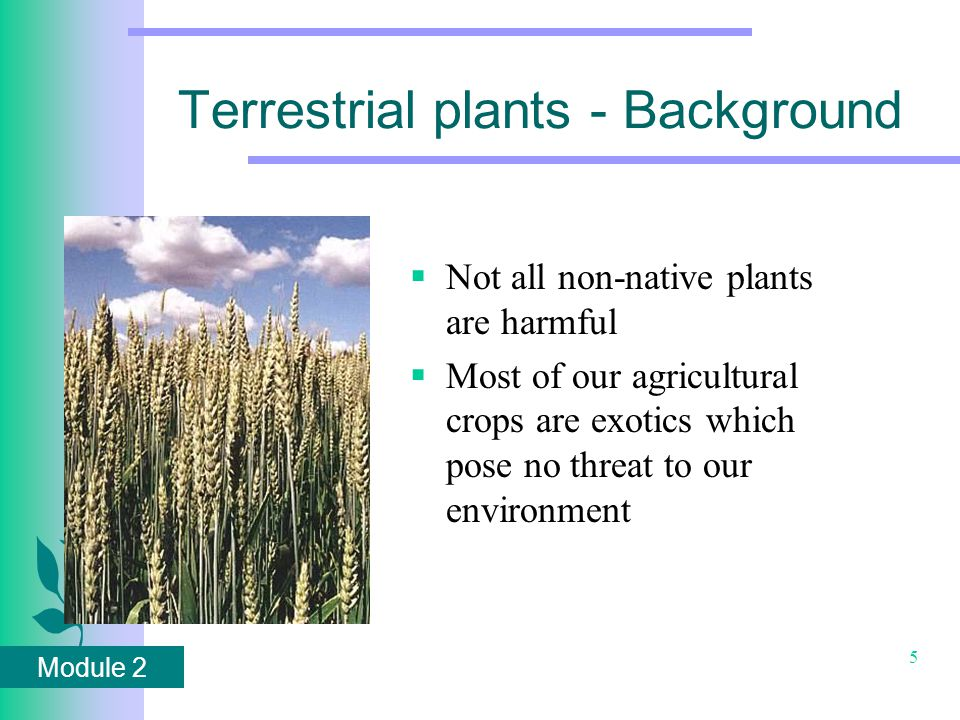 Module 2 5 Terrestrial plants - Background  Not all non-native plants are harmful  Most of our agricultural crops are exotics which pose no threat to our environment