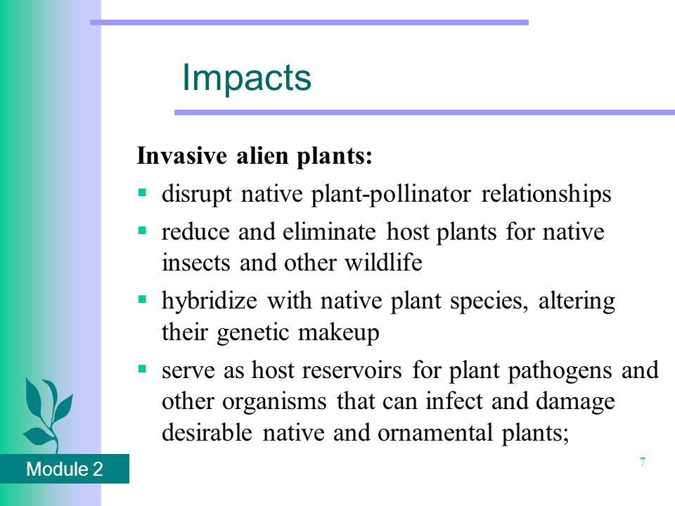 Module 2 8 Impacts Alien Invasive Impacts  replace nutritious native plant foods with lower quality sources  kill trees and shrubs through girdling  increase the incidence of plant disease and stress in forested areas  prevent seedling establishment of native trees and shrubs  reduce vigor of mature trees through shading