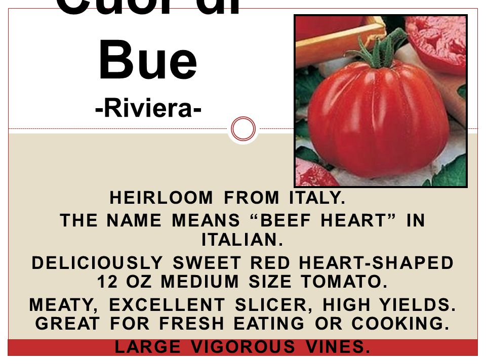 HEIRLOOM FROM ITALY. THE NAME MEANS BEEF HEART IN ITALIAN.