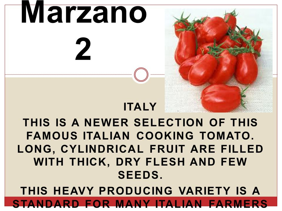 ITALY THIS IS A NEWER SELECTION OF THIS FAMOUS ITALIAN COOKING TOMATO.