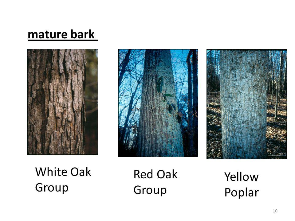 mature bark White Oak Group Red Oak Group Yellow Poplar 10