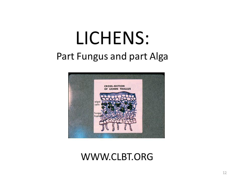 LICHENS: Part Fungus and part Alga WWW.CLBT.ORG 12