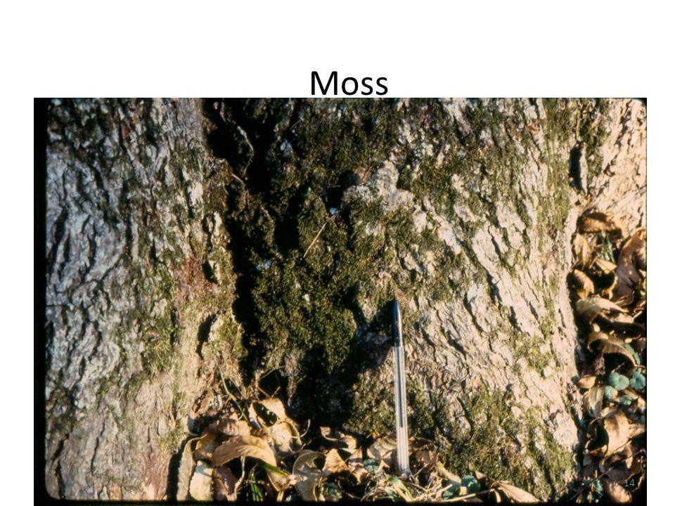Moss 14