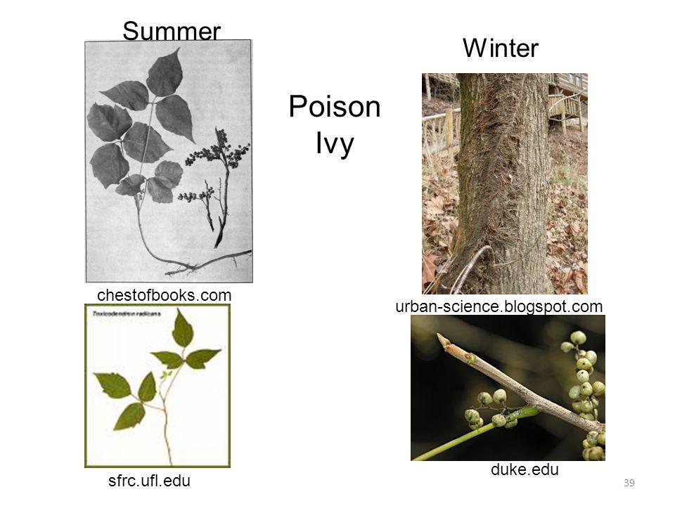 sfrc.ufl.edu chestofbooks.com urban-science.blogspot.com duke.edu 39 Poison Ivy Summer Winter