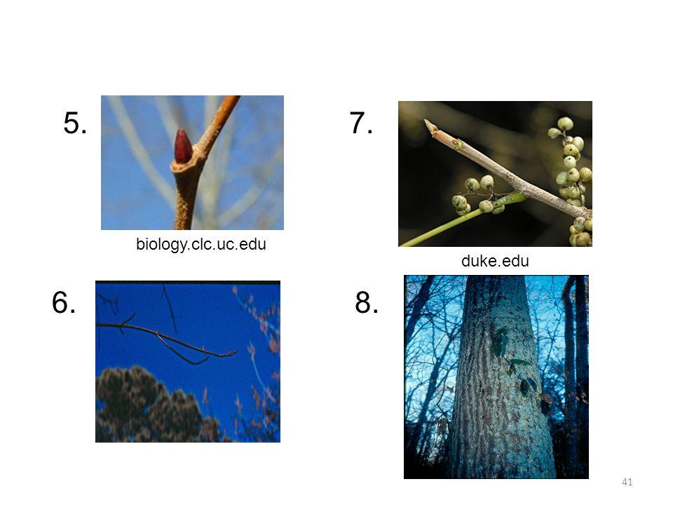 41 duke.edu biology.clc.uc.edu 5. 6. 7. 8.