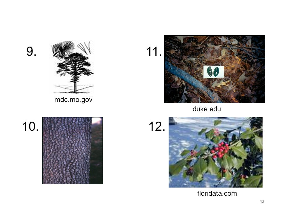 42 duke.edu 9. 10. 11. 12. mdc.mo.gov floridata.com