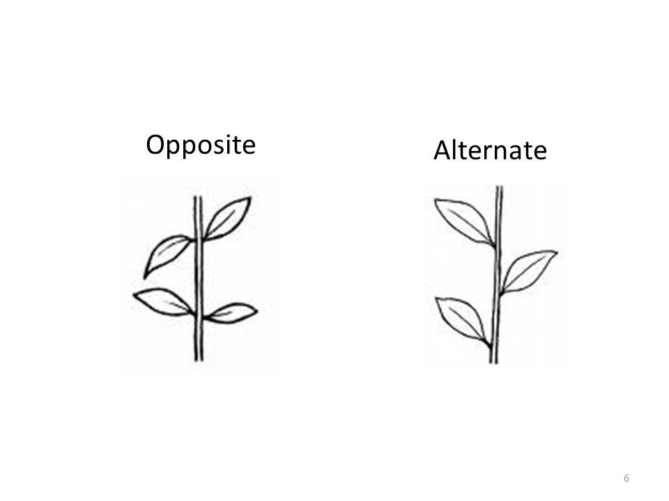 Opposite Alternate 6