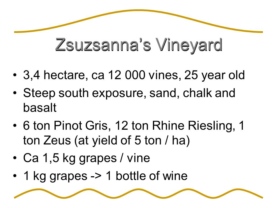 Zsuzsanna's Vineyard 3,4 hectare, ca 12 000 vines, 25 year old Steep south exposure, sand, chalk and basalt 6 ton Pinot Gris, 12 ton Rhine Riesling, 1