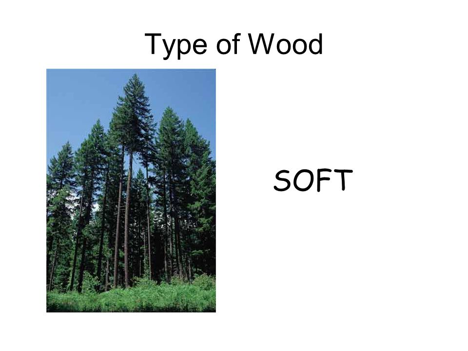 Type of Wood SOFT