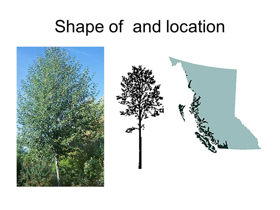 Shape of and location