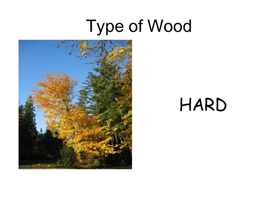 HARD Type of Wood