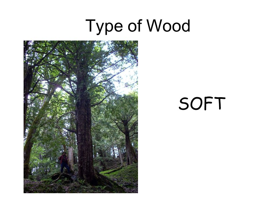 SOFT Type of Wood