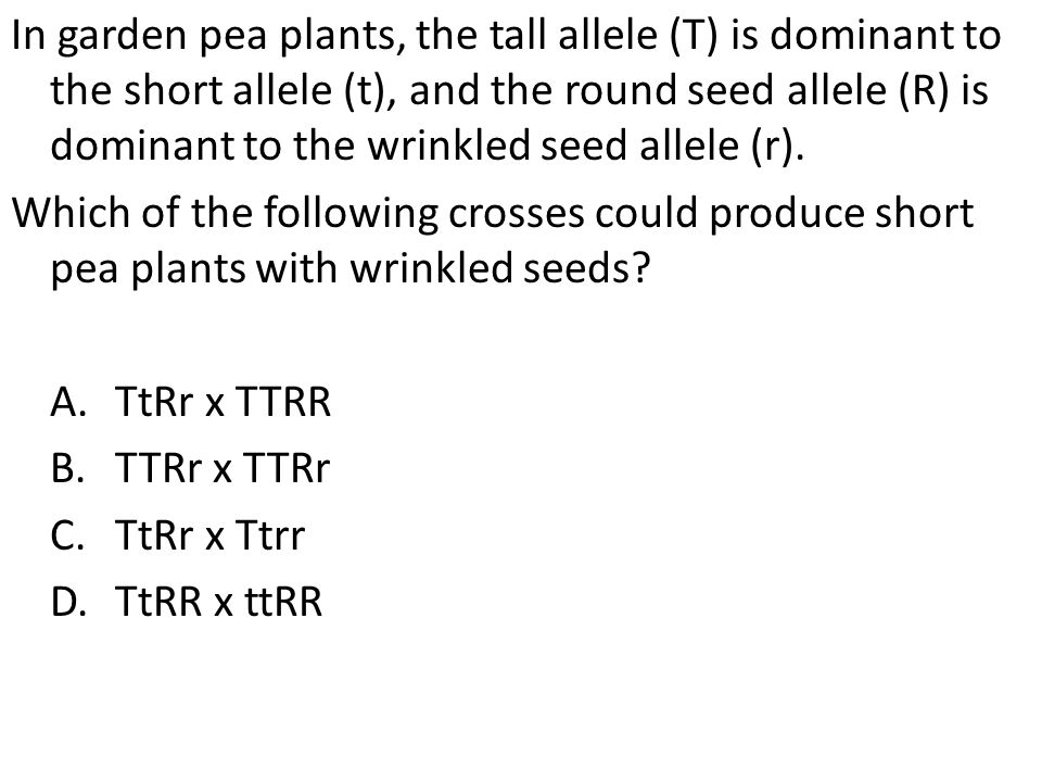 In garden pea plants, the tall allele (T) is dominant to the short allele (t), and the round seed allele (R) is dominant to the wrinkled seed allele (