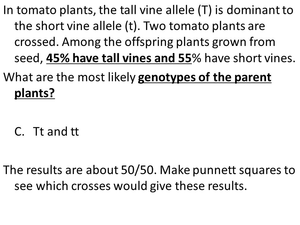 In tomato plants, the tall vine allele (T) is dominant to the short vine allele (t). Two tomato plants are crossed. Among the offspring plants grown f