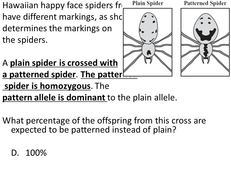 Hawaiian happy face spiders from the island of Maui can have different markings, as shown below. A single gene determines the markings on the spiders.