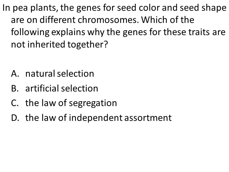 In pea plants, the genes for seed color and seed shape are on different chromosomes. Which of the following explains why the genes for these traits ar
