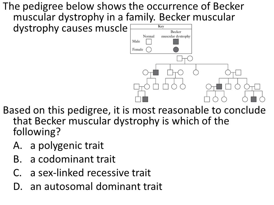 The pedigree below shows the occurrence of Becker muscular dystrophy in a family. Becker muscular dystrophy causes muscle weakness. Based on this pedi