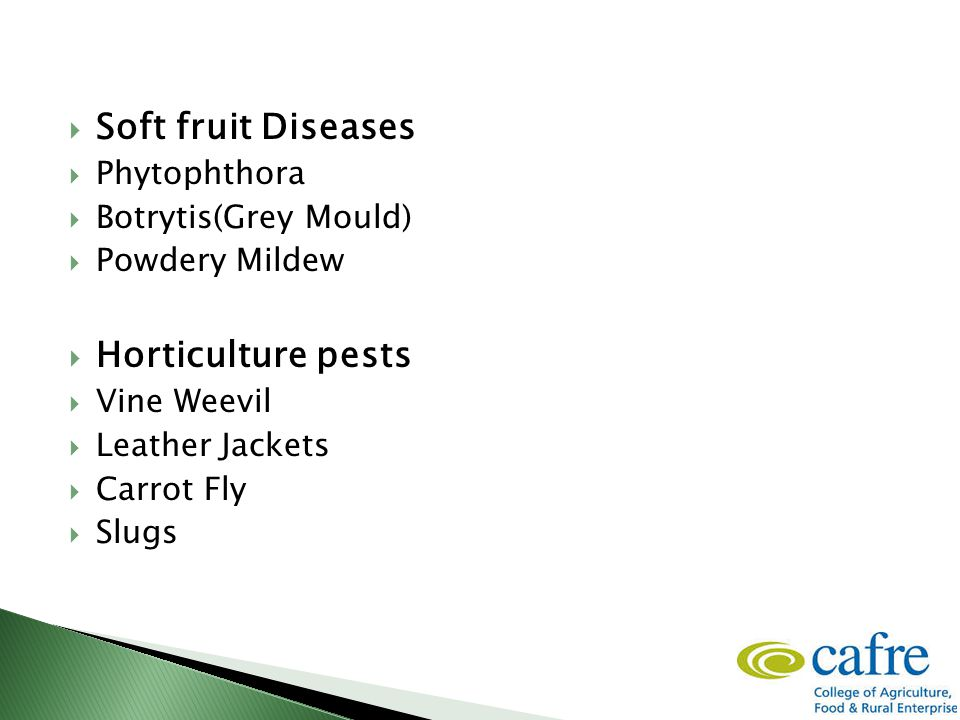  Soft fruit Diseases  Phytophthora  Botrytis(Grey Mould)  Powdery Mildew  Horticulture pests  Vine Weevil  Leather Jackets  Carrot Fly  Slugs