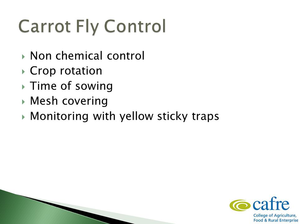  Non chemical control  Crop rotation  Time of sowing  Mesh covering  Monitoring with yellow sticky traps