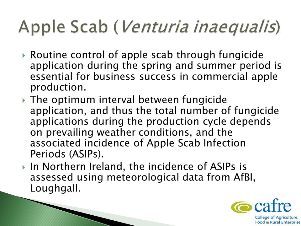  Routine control of apple scab through fungicide application during the spring and summer period is essential for business success in commercial apple production.