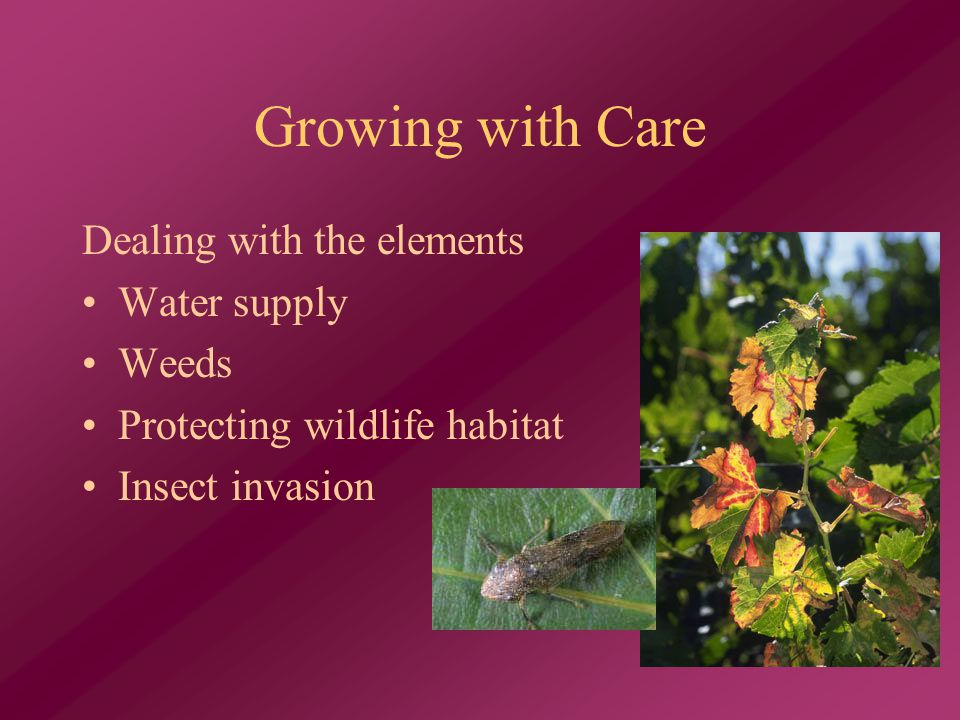 Growing with Care Dealing with the elements Water supply Weeds Protecting wildlife habitat Insect invasion