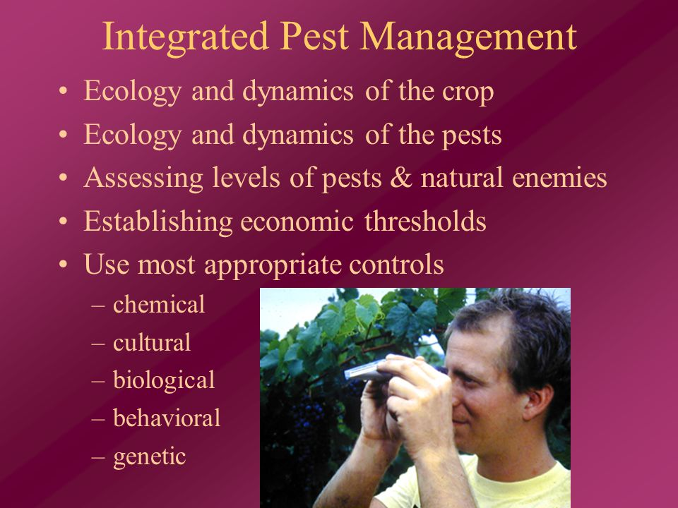 Integrated Pest Management Ecology and dynamics of the crop Ecology and dynamics of the pests Assessing levels of pests & natural enemies Establishing economic thresholds Use most appropriate controls –chemical –cultural –biological –behavioral –genetic