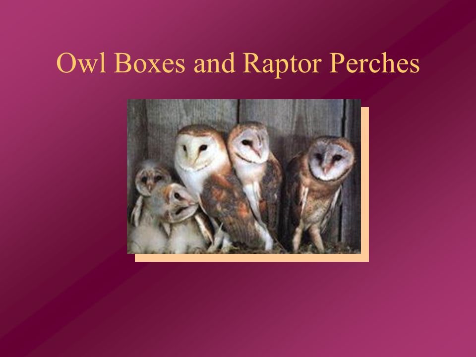 Owl Boxes and Raptor Perches
