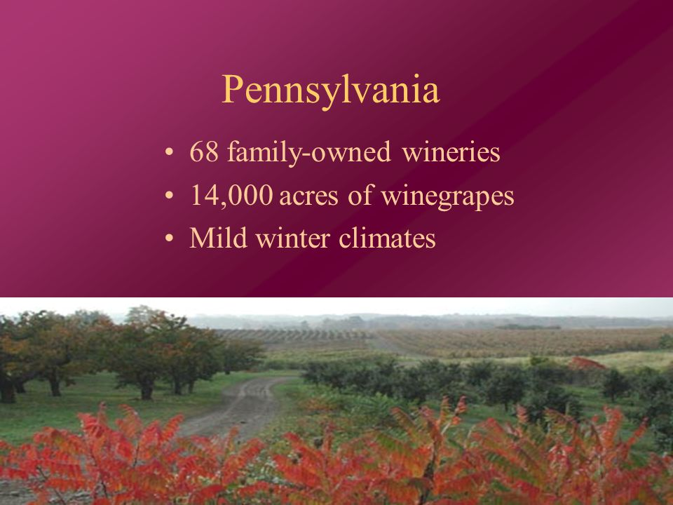 Pennsylvania 68 family-owned wineries 14,000 acres of winegrapes Mild winter climates