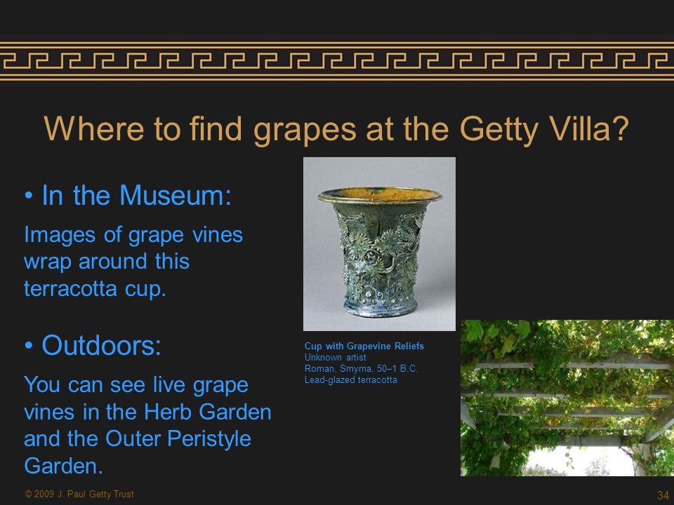 Where to find grapes at the Getty Villa.