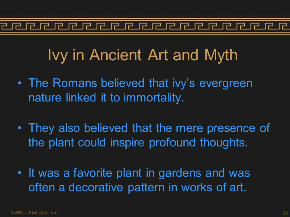 Ivy in Ancient Art and Myth The Romans believed that ivy's evergreen nature linked it to immortality.