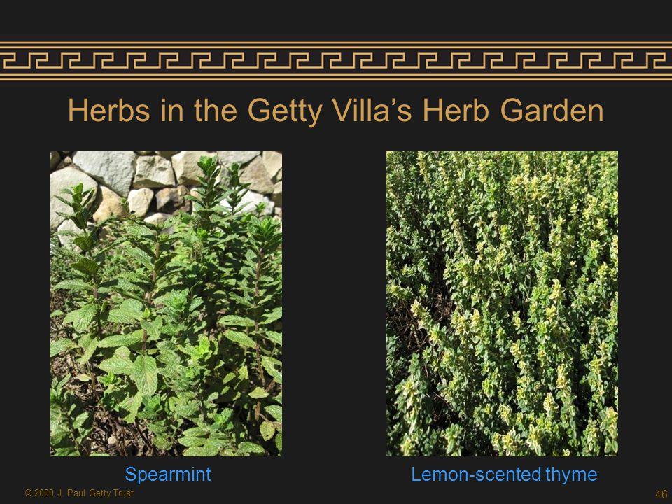 Herbs in the Getty Villa's Herb Garden 46 SpearmintLemon-scented thyme © 2009 J. Paul Getty Trust