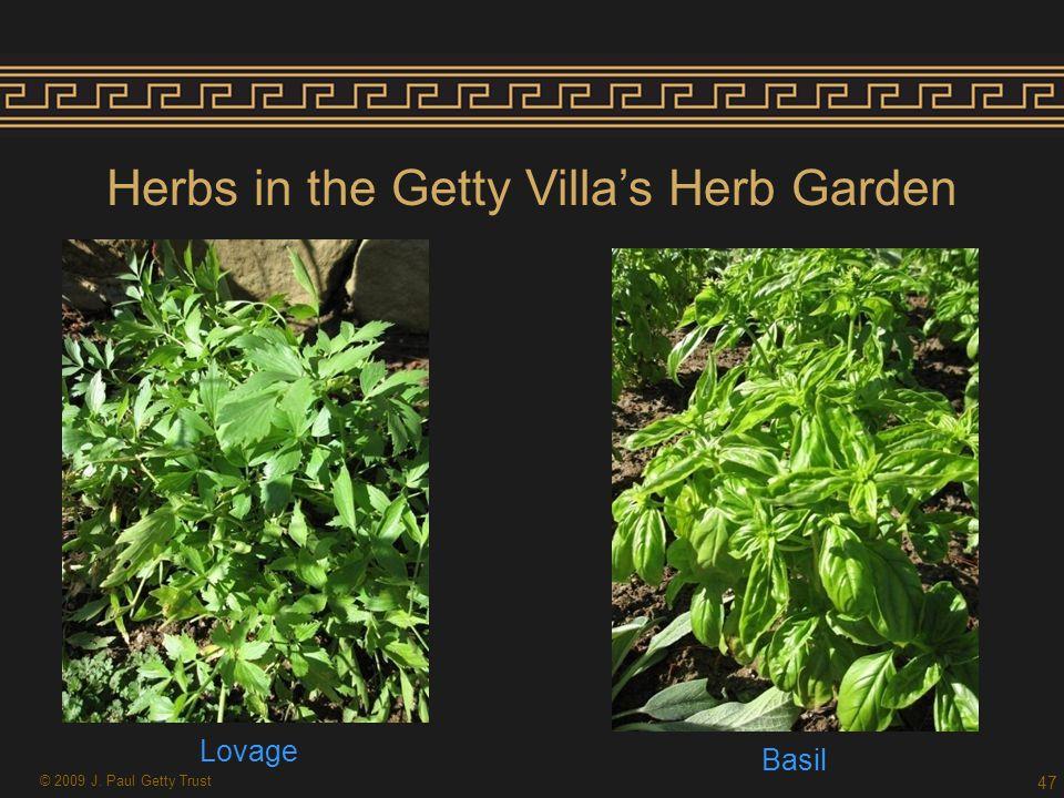 Herbs in the Getty Villa's Herb Garden Lovage Basil 47 © 2009 J. Paul Getty Trust